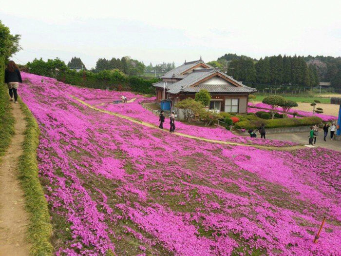 marito-pianta-fiori-moglie-ceca-kuroki-shintomi-07