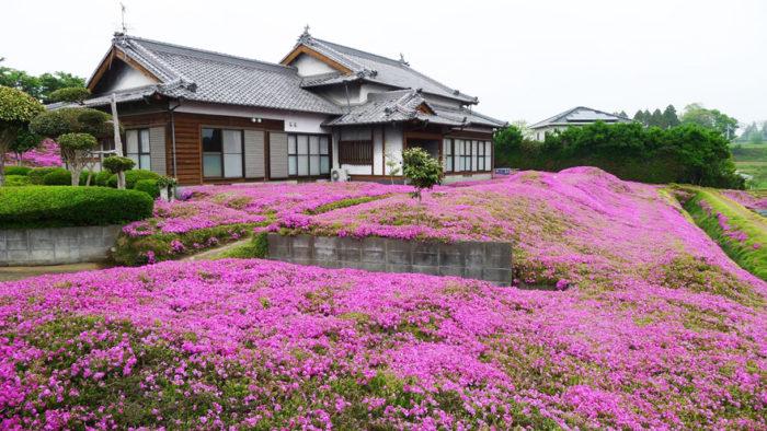 marito-pianta-fiori-moglie-ceca-kuroki-shintomi-09