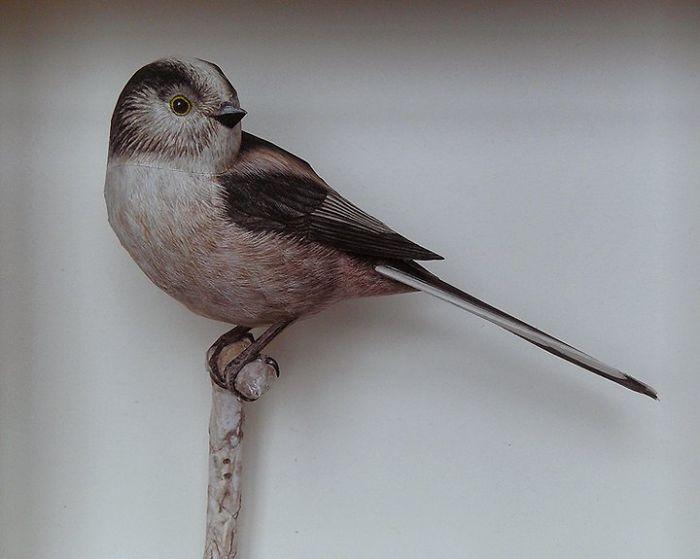 sculture-uccelli-carta-realistici-johan-scherft-02