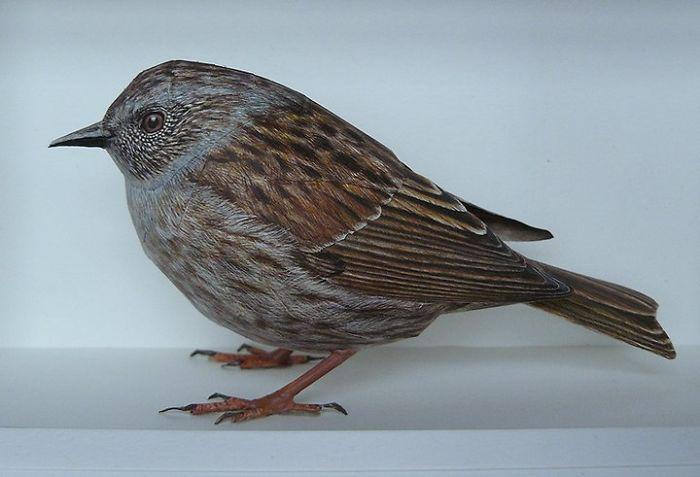 sculture-uccelli-carta-realistici-johan-scherft-03