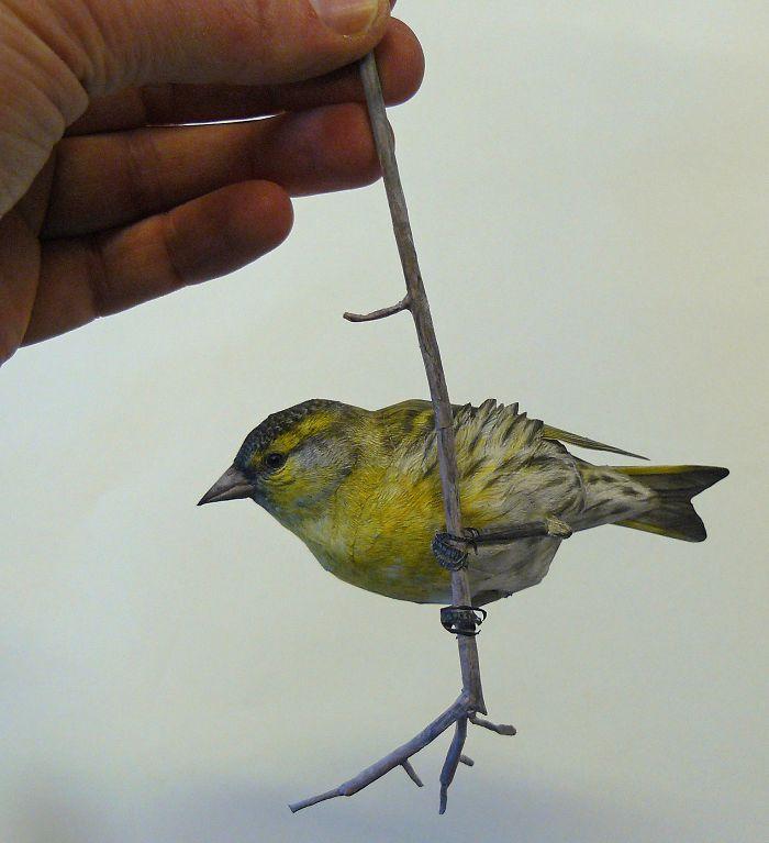 sculture-uccelli-carta-realistici-johan-scherft-22