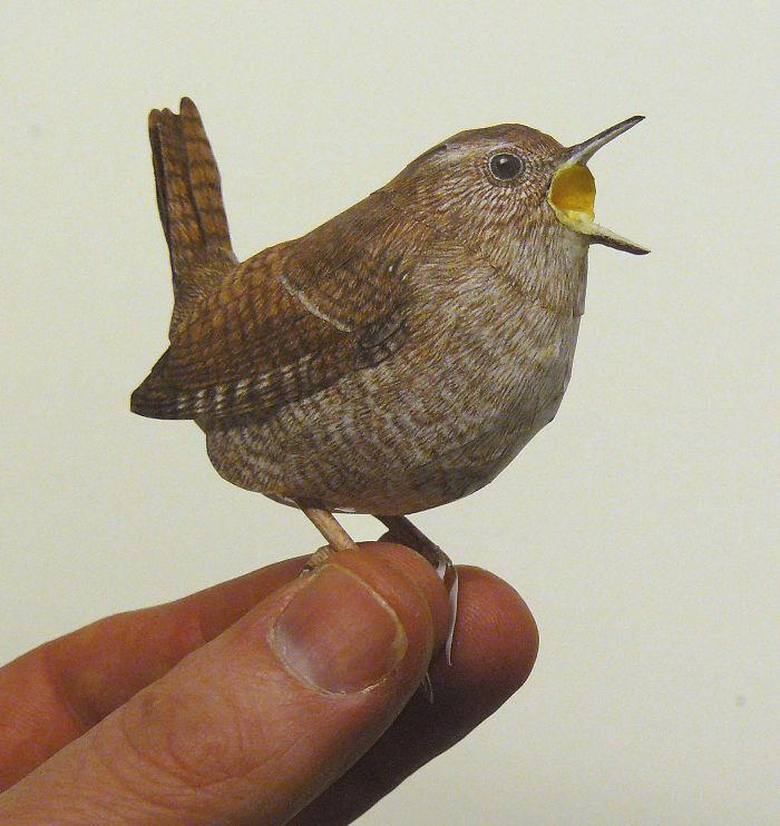 sculture-uccelli-carta-realistici-johan-scherft-25