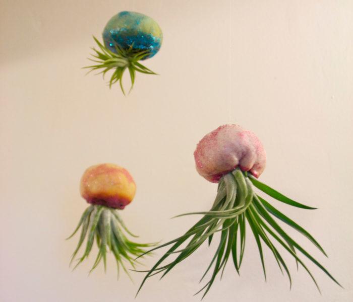 vasi-fioriere-piante-aria-tillandsia-jellyfishkisses-02