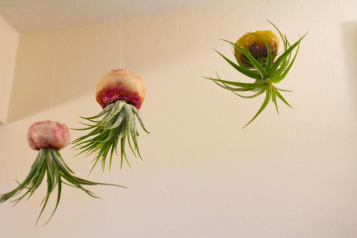 vasi-fioriere-piante-aria-tillandsia-jellyfishkisses-03
