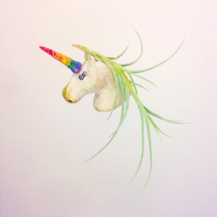 vasi-fioriere-piante-aria-tillandsia-jellyfishkisses-05