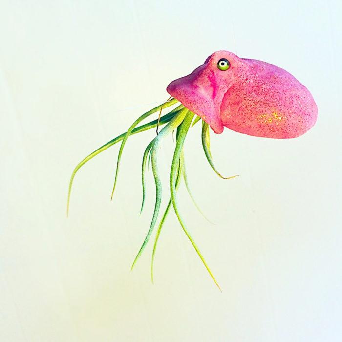 vasi-fioriere-piante-aria-tillandsia-jellyfishkisses-07