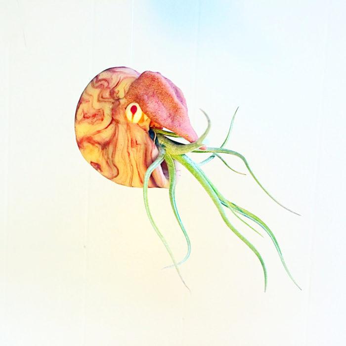 vasi-fioriere-piante-aria-tillandsia-jellyfishkisses-08