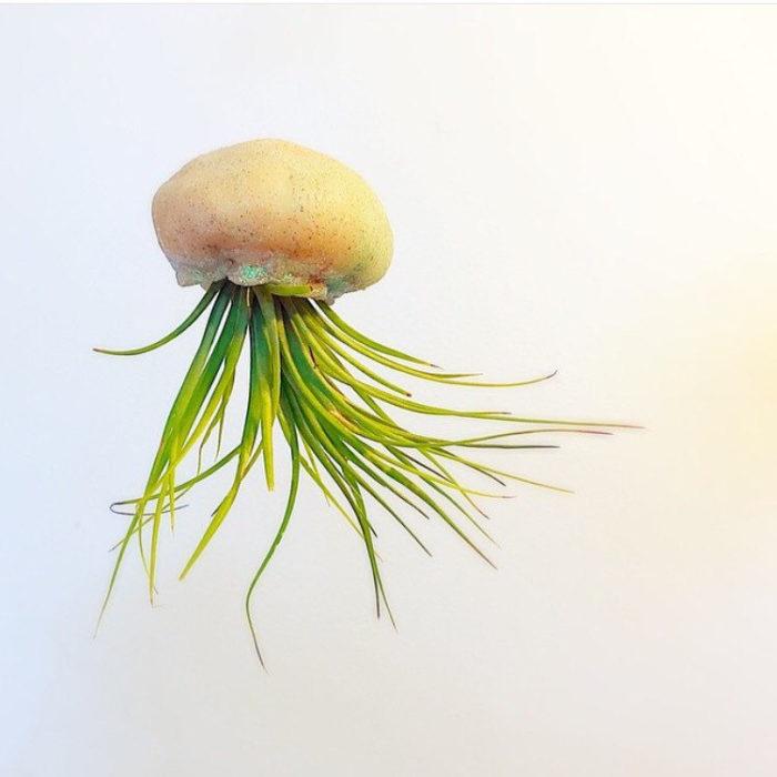 vasi-fioriere-piante-aria-tillandsia-jellyfishkisses-15