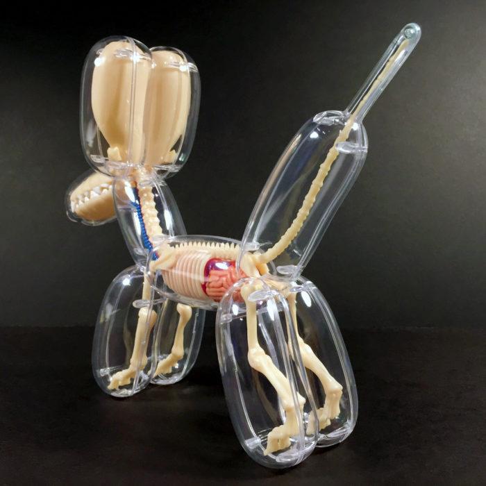 animali-palloncini-trasparenti-anatomia-ossa-organi-jason-freeny-01