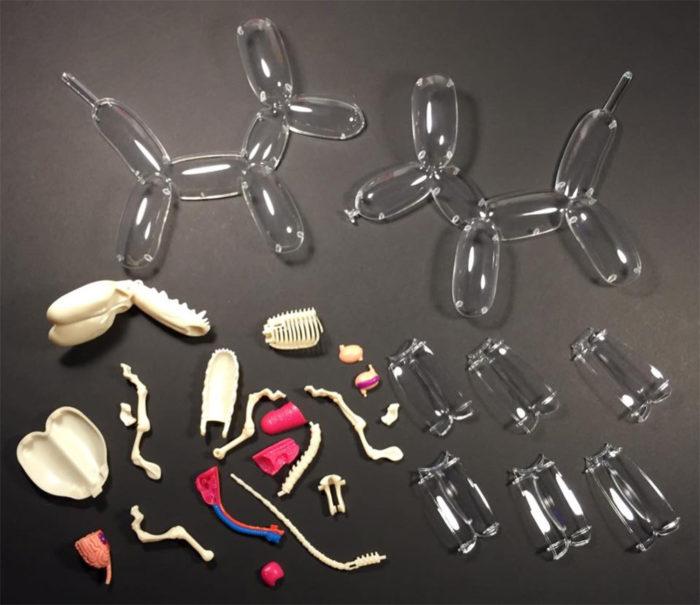 animali-palloncini-trasparenti-anatomia-ossa-organi-jason-freeny-06