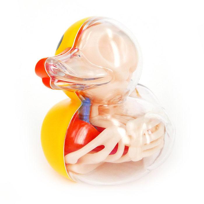 animali-palloncini-trasparenti-anatomia-ossa-organi-jason-freeny-07