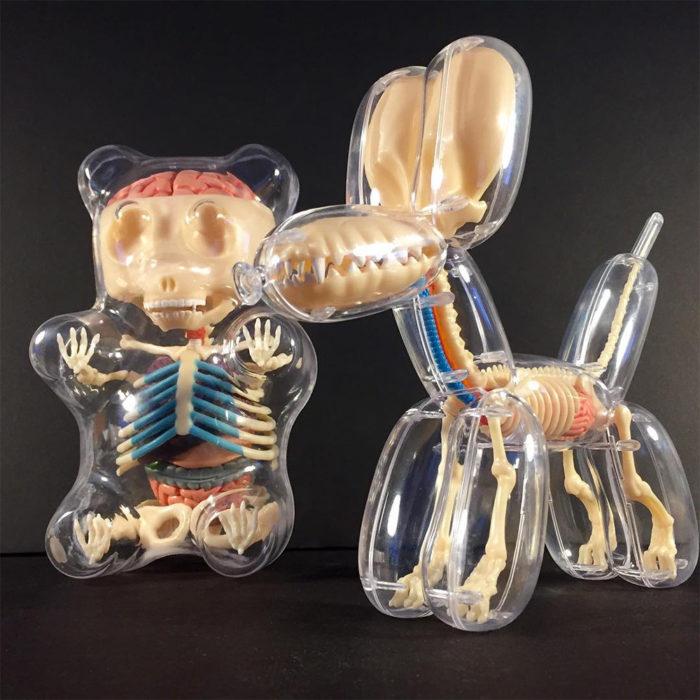 animali-palloncini-trasparenti-anatomia-ossa-organi-jason-freeny-11