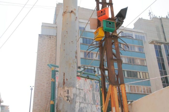 artista-costruisce-casette-uccelli-mondo-danimarca-dambo-02