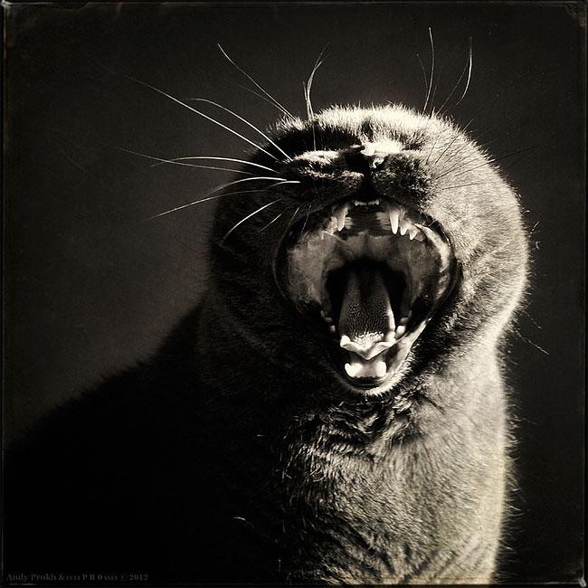 bambina-gatto-fotografia-andrey-prokhorov-andy-prokh-25
