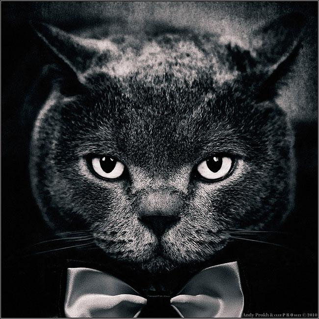 bambina-gatto-fotografia-andrey-prokhorov-andy-prokh-52