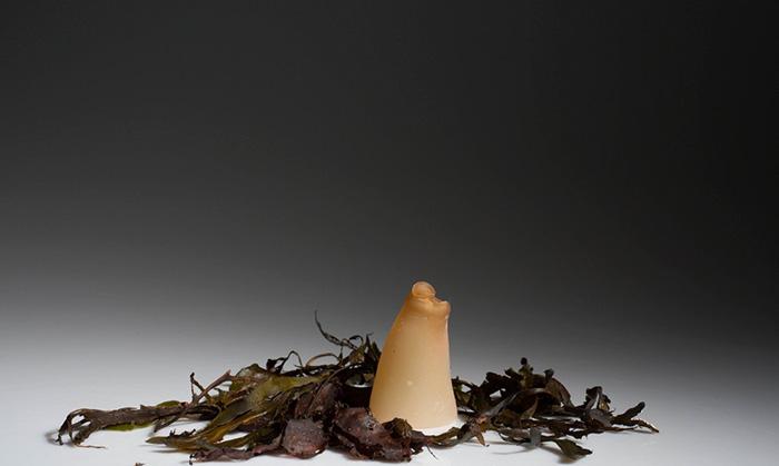 bottiglia-biodegradabile-alghe-plastica-ari-jonsson-7