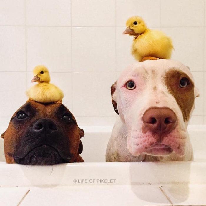 cani-anatroccoli-fratelli-1