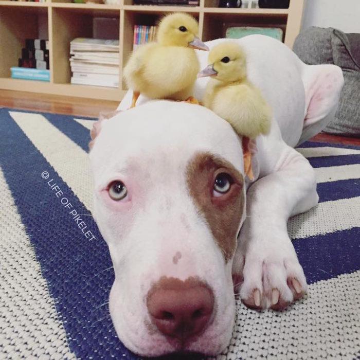 cani-anatroccoli-fratelli-2