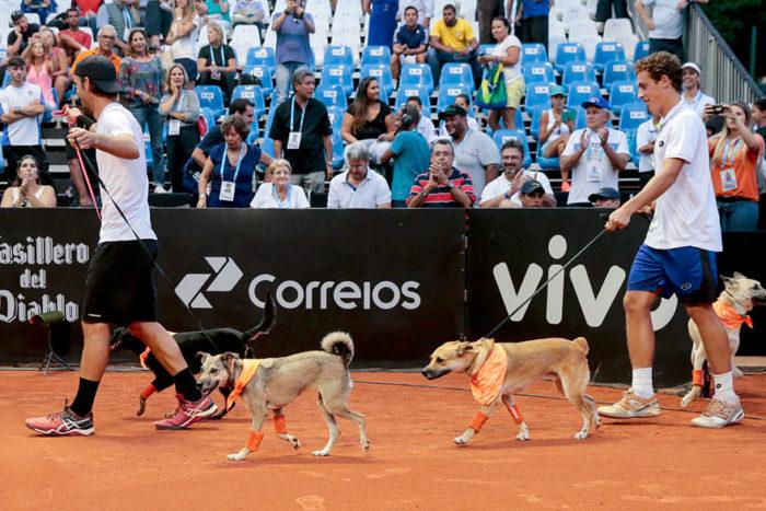 cani-randagi-raccattapalle-tennis-open-brasile-torneo-1