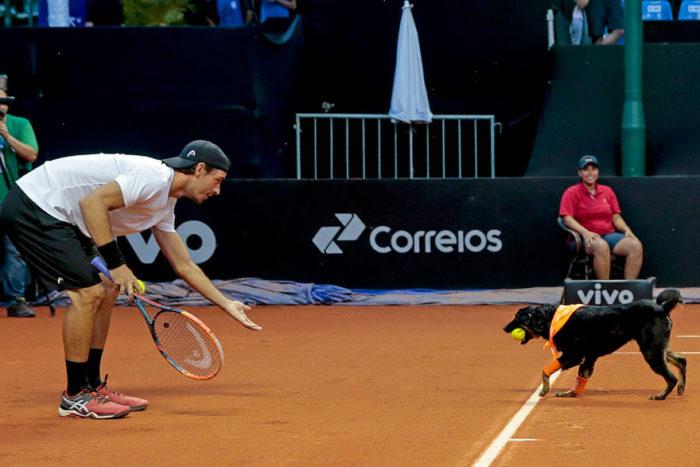 cani-randagi-raccattapalle-tennis-open-brasile-torneo-2
