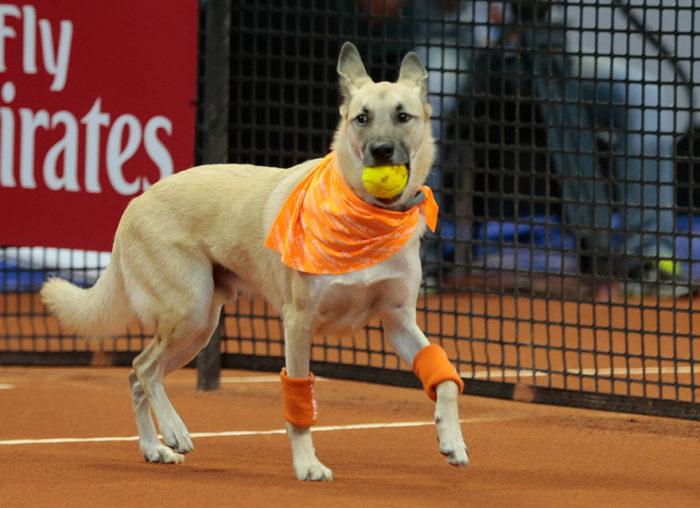 cani-randagi-raccattapalle-tennis-open-brasile-torneo-4