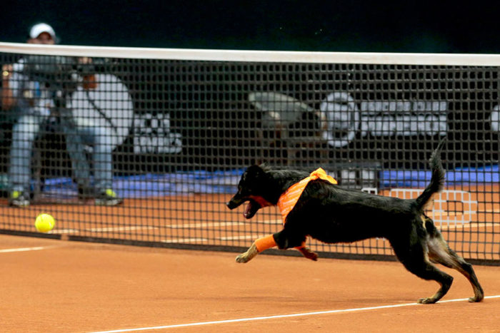 cani-randagi-raccattapalle-tennis-open-brasile-torneo-5