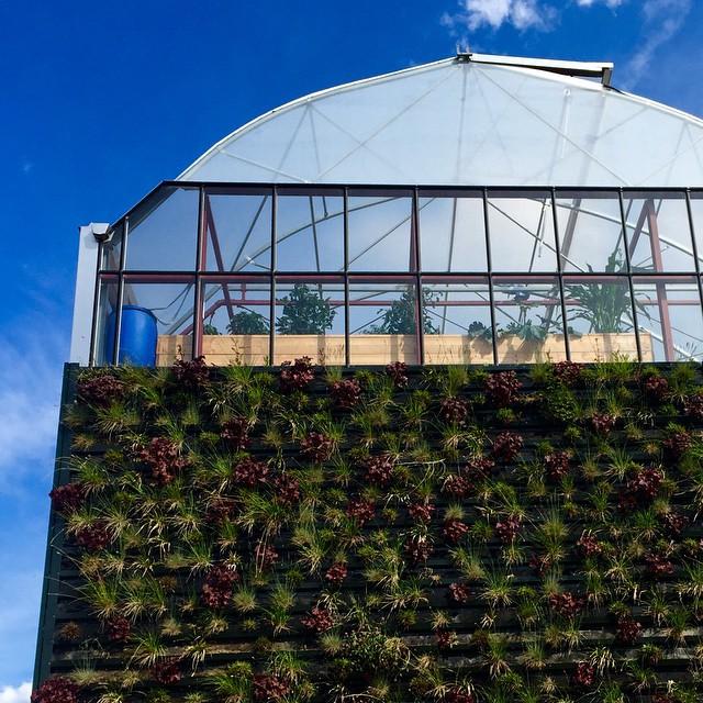 casa-eco-sostenibile-serra-gigante-rotterdam-09