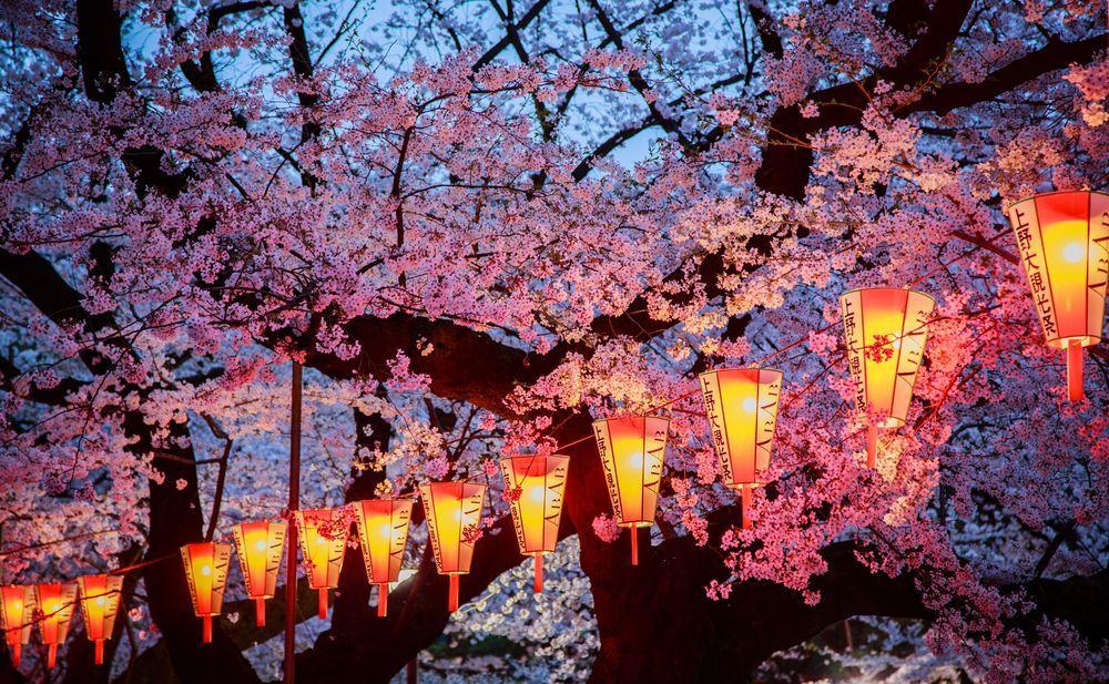 ciliegi-in-fiore-giappone-primavera-national-geographic-03