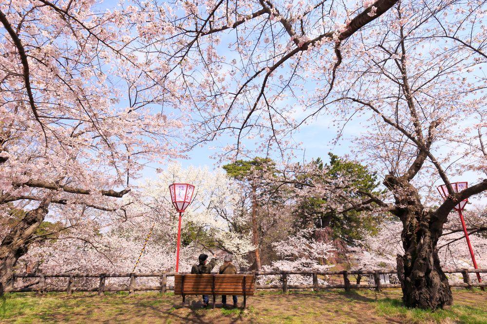 ciliegi-in-fiore-giappone-primavera-national-geographic-06