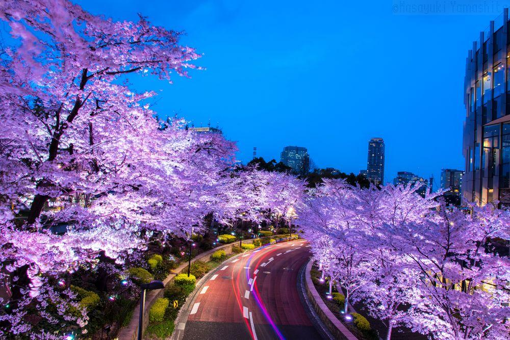 ciliegi-in-fiore-giappone-primavera-national-geographic-09