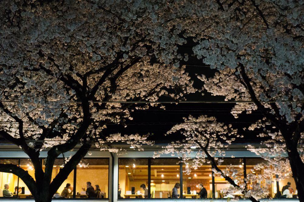 ciliegi-in-fiore-giappone-primavera-national-geographic-10