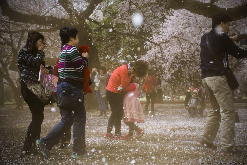 ciliegi-in-fiore-giappone-primavera-national-geographic-12