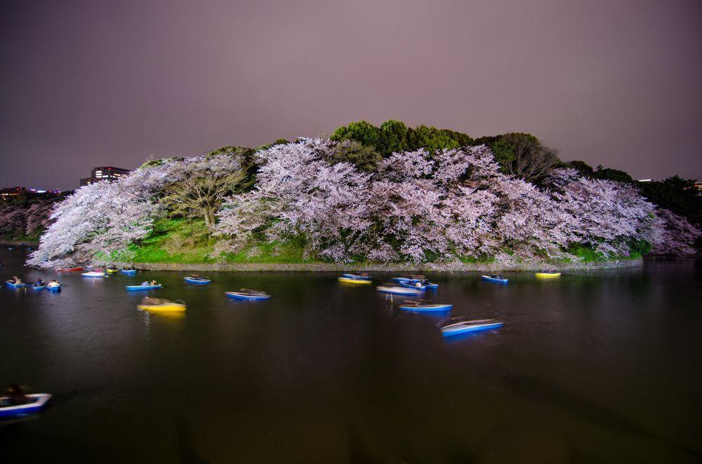 ciliegi-in-fiore-giappone-primavera-national-geographic-14