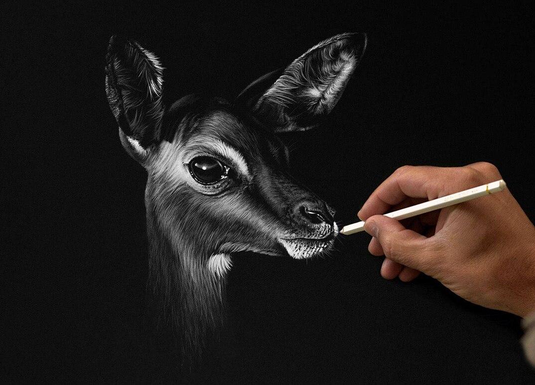 disegni-dipinti-iperrealisti-animali-selvatici-africa-richards-symonds-02
