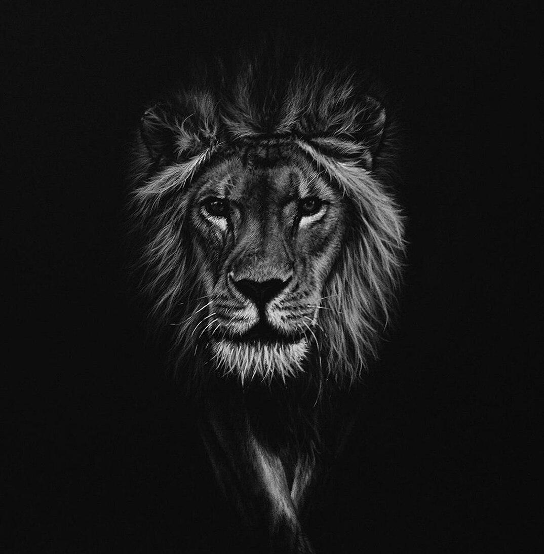 disegni-dipinti-iperrealisti-animali-selvatici-africa-richards-symonds-03