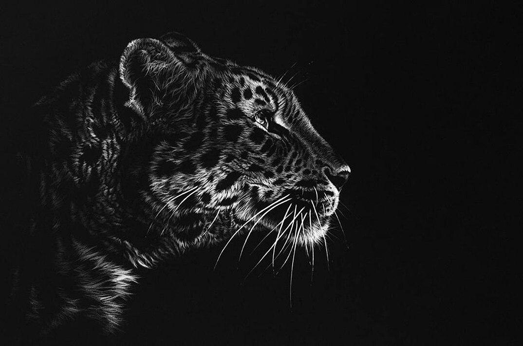 disegni-dipinti-iperrealisti-animali-selvatici-africa-richards-symonds-04