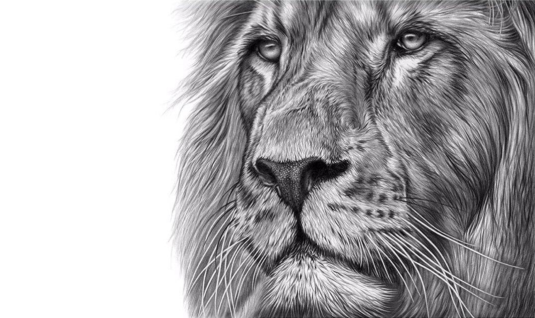 disegni-dipinti-iperrealisti-animali-selvatici-africa-richards-symonds-13