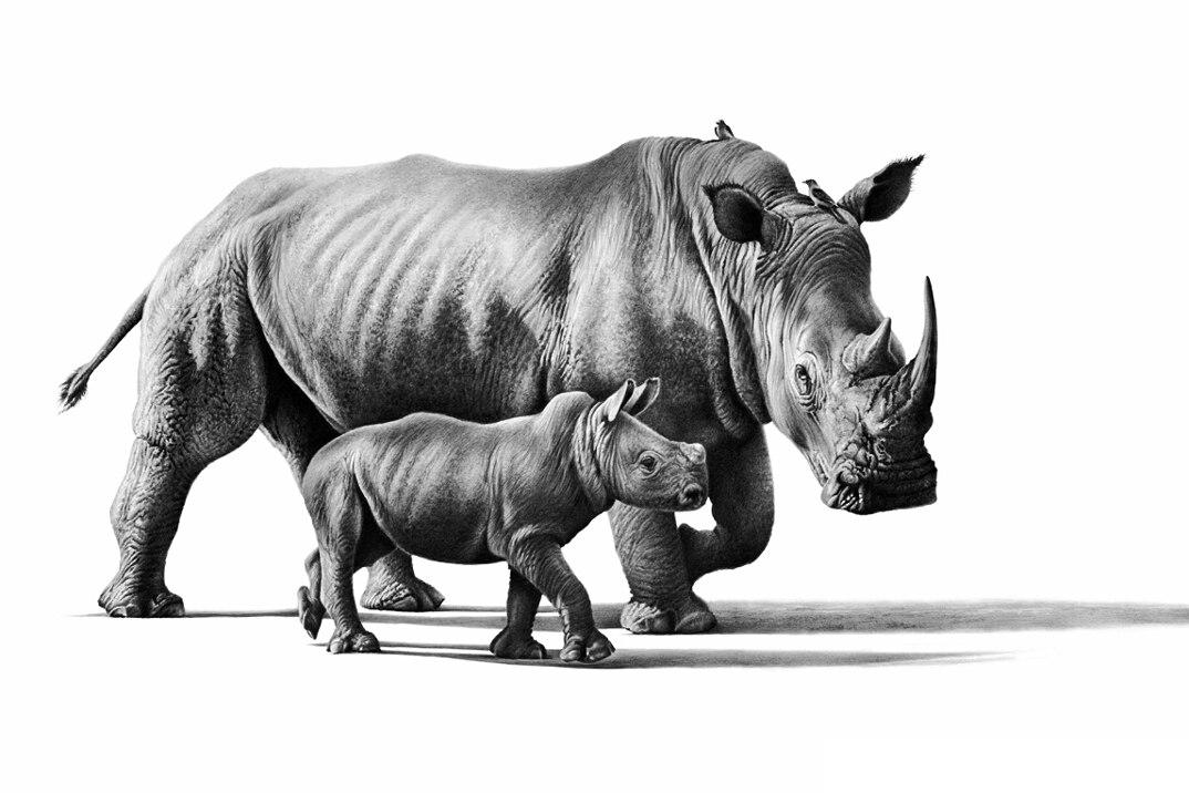 disegni-dipinti-iperrealisti-animali-selvatici-africa-richards-symonds-14