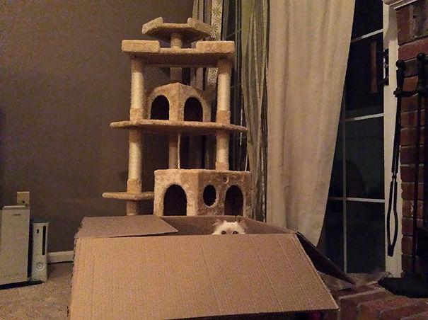 divertente-logica-gatti-regali-11