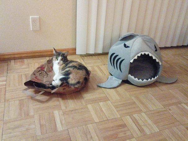 divertente-logica-gatti-regali-12