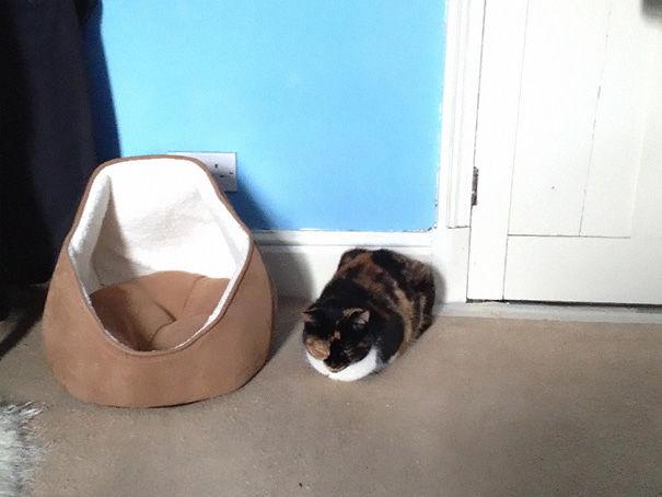 divertente-logica-gatti-regali-14