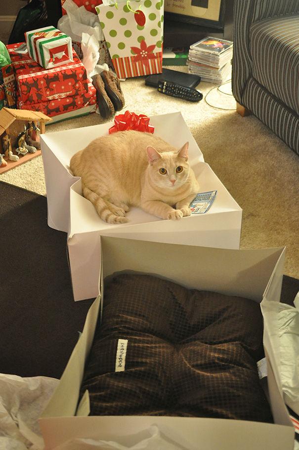 divertente-logica-gatti-regali-15