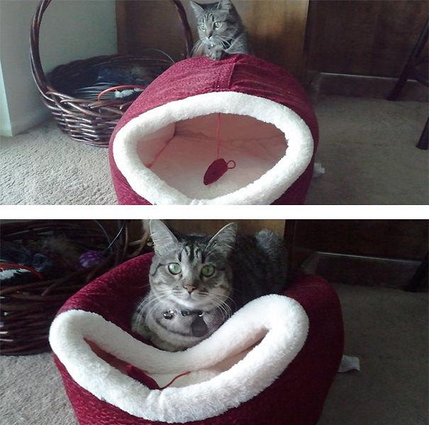 divertente-logica-gatti-regali-16