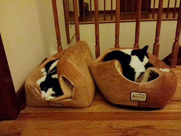 divertente-logica-gatti-regali-18