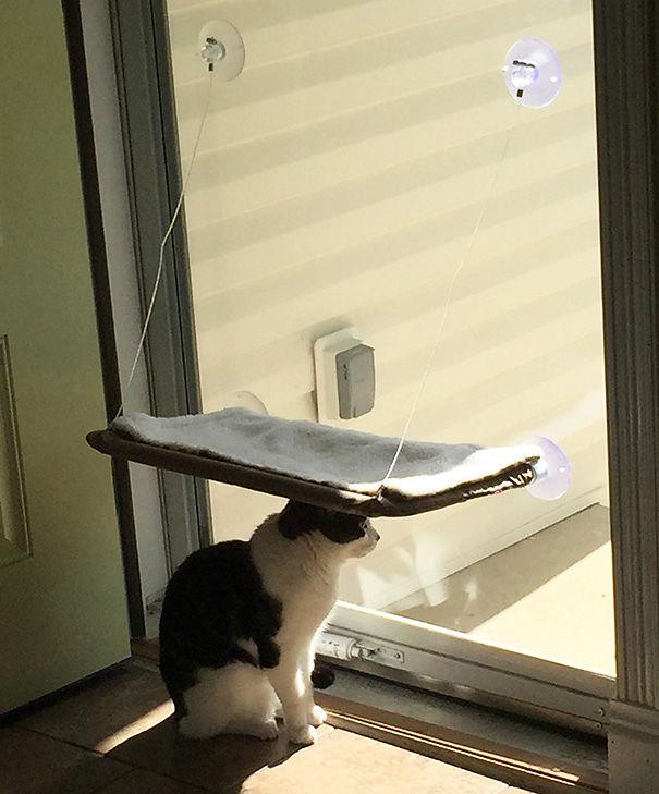 divertente-logica-gatti-regali-21