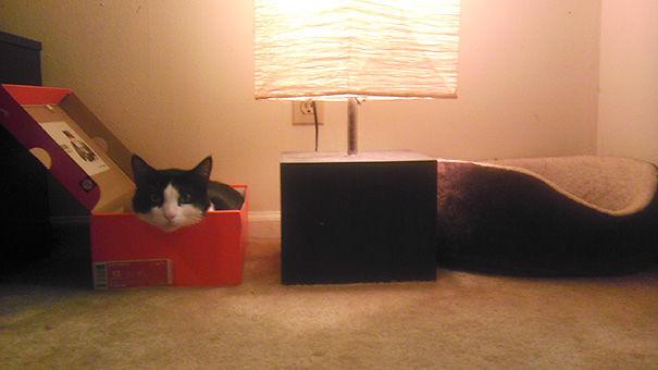 divertente-logica-gatti-regali-22