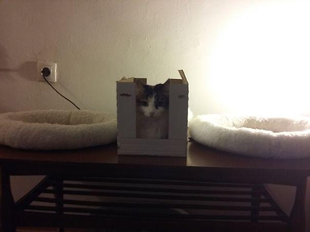 divertente-logica-gatti-regali-23