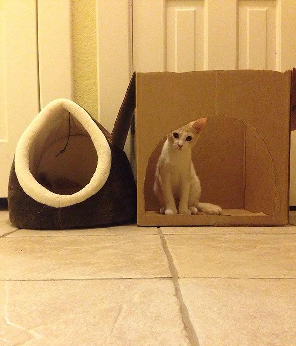 divertente-logica-gatti-regali-24