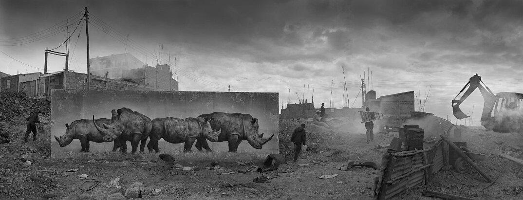 fotografia-africa-distruzione-animali-selvatici-nick-brandt-01