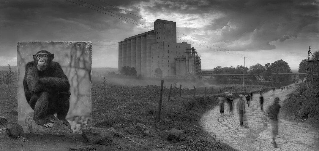 fotografia-africa-distruzione-animali-selvatici-nick-brandt-02
